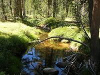 West Fork Granite Creek