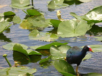 Everglades National Park - Jul 2004