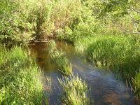 Anhinga & Gumbo Limbo Trails at Everglades National Park
