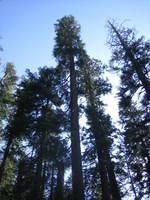 California 2005 034