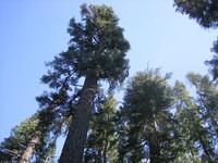 California 2005 035