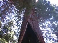 California 2005 132