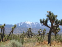 Joshua Trees and Mt. Baldy area