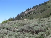 Jason stalks a marmot