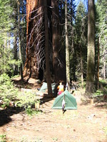 Giant Sequoia watching over our campsite