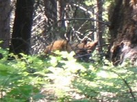 Bear cropped