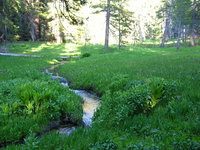 Pretty little stream at Little Sandy Meadow