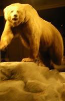 Bear that got in my face